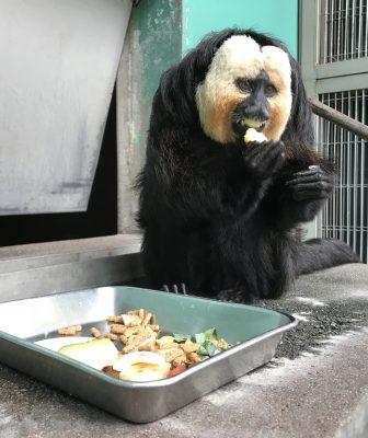 食べてるモップくん