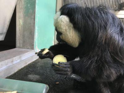 バナナを取ったモップくん!