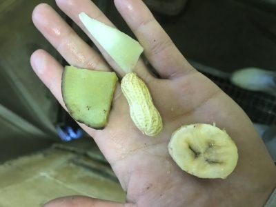 蒸しイモと落花生とメロンとバナナ
