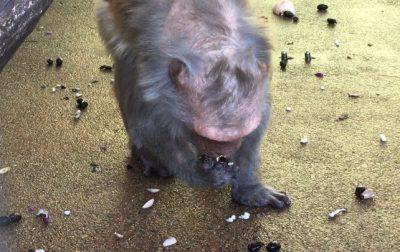 黒豆を食べるローレライ