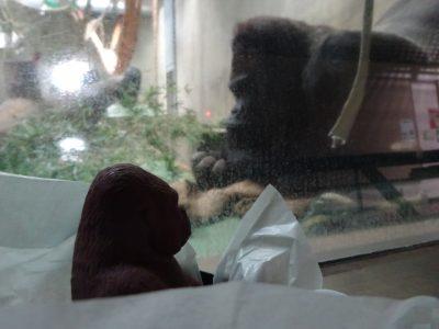 チョコを見るタロウ