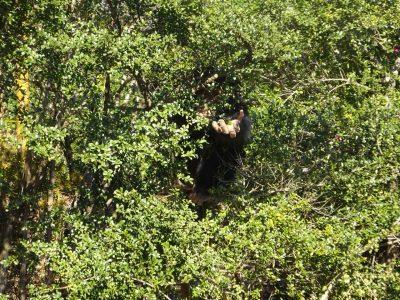 森の中からマモルが手を伸ばす