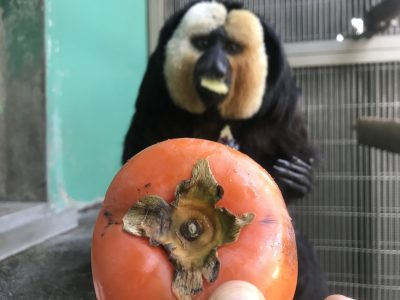 柿よりムシイモ