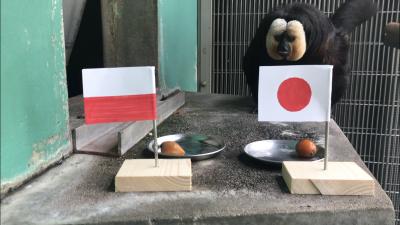 日本対ポーランド対戦占いモップはどちらを選ぶ?