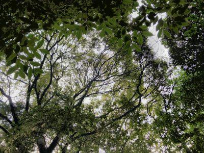 木の下から仰ぎ見る