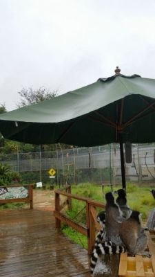 雨宿りパラソル