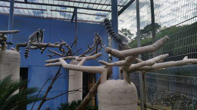 バオバブの偽木