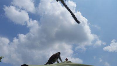 尻尾ジャンプ