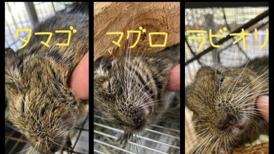 http://www.j-monkey.jp/jmckeeper/wp-content/uploads/2019/10/FullSizeRender-31-10-19-12-54-400x225.jpg