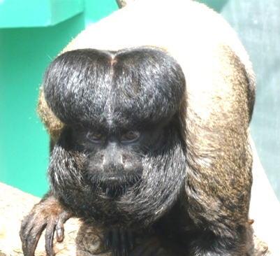動物園獣医が書き綴る動物園歳時...